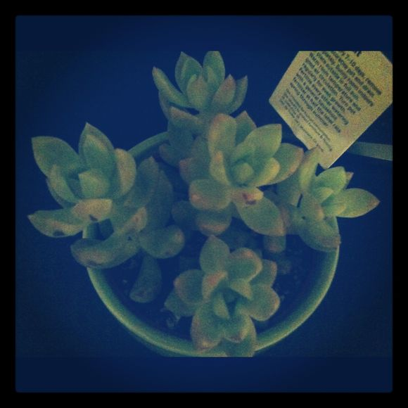 S is for succulents